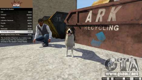 GTA 5 Animal Ark Shelter cuarto captura de pantalla